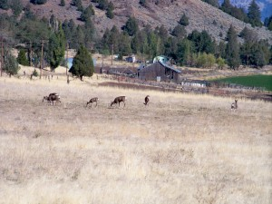 Deer in upper field